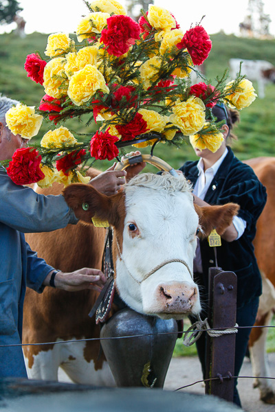 Preparing the leaders of the herds with traditional floral headdresses. © Alexander Belokurov, St Cergue - Switzerland, 2014.