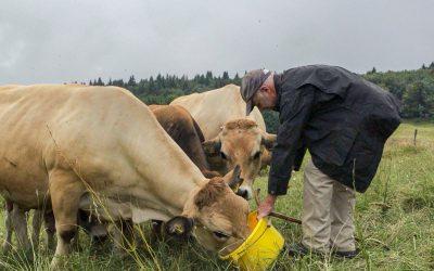 Meeting the Last Mobile Pastoralists of Geneva
