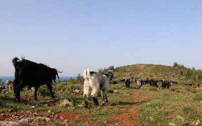 On the Move with Sarıkeçili Nomads – Day 1