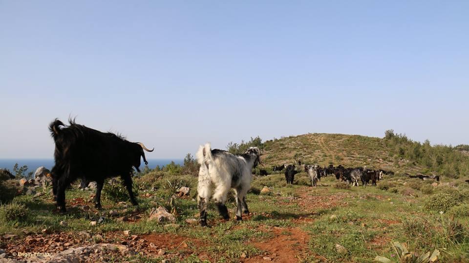 On the Move with Sarıkeçili Nomads – Day 1