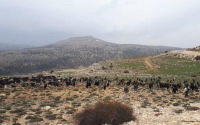 Mobile Pastoralism Contributes to Habitat Heterogeneity (Day 12)