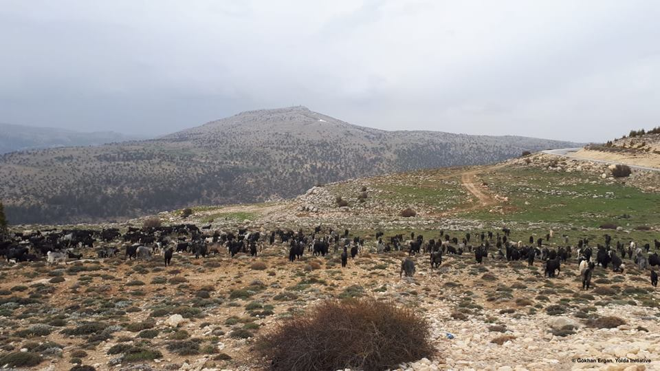 Mobile Pastoralism Contributes to Habitat Heterogeneity (Day 12)