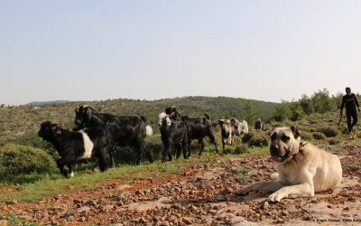 Mobile Pastoralists know how to Coexist with Wildlife (Day 13)