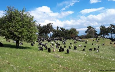 Mobile Pastoralism is the most Climate Friendly Livestock Farming System (Day 14)