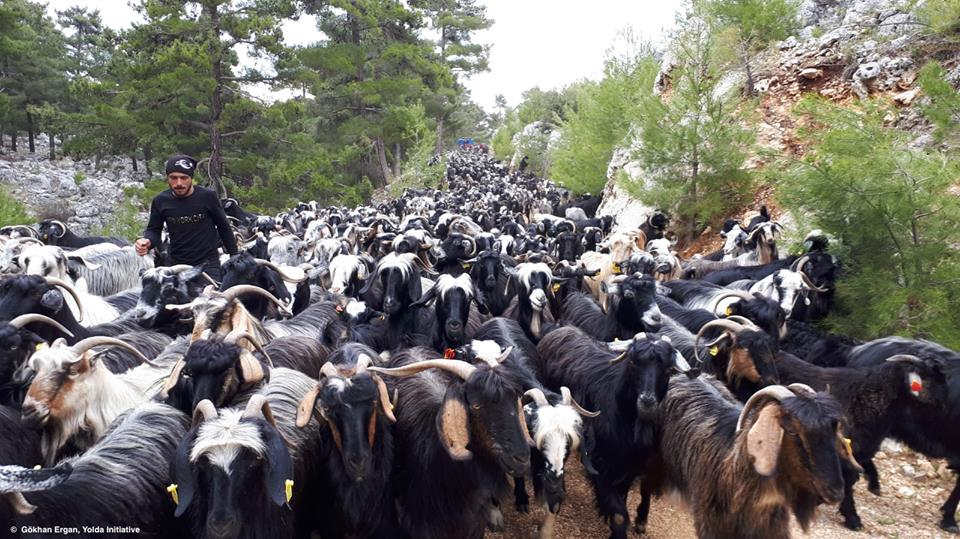 Mobile Pastoralism is the most Efficient Livestock Farming System (Day 3)
