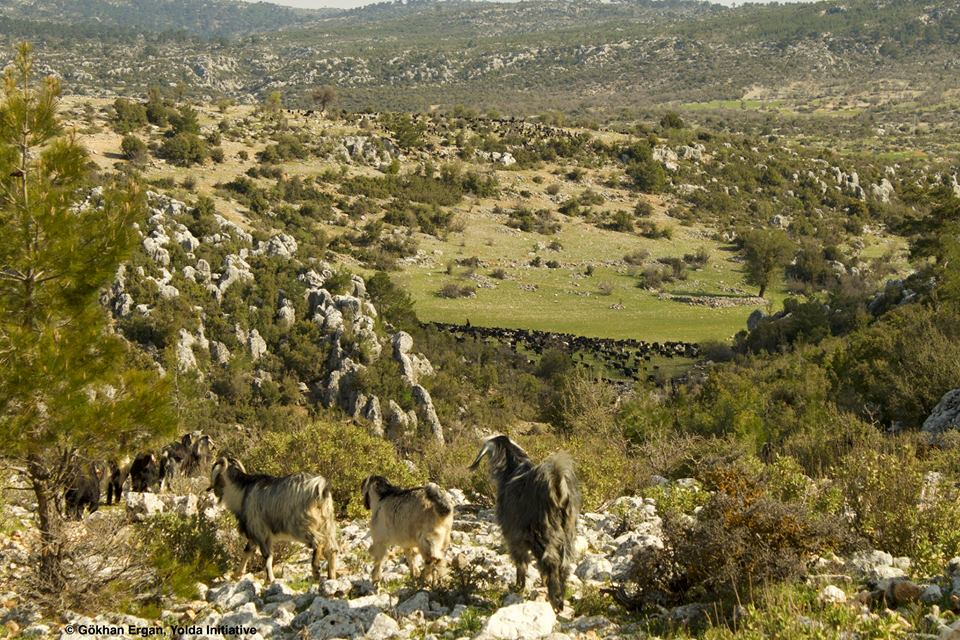 Mobile Pastoralism Protects the Soil (Day 6)