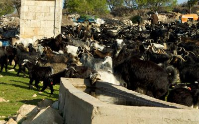 Mobile Pastoralism has Direct Benefits for Water Cycle Regulation (Day 7)