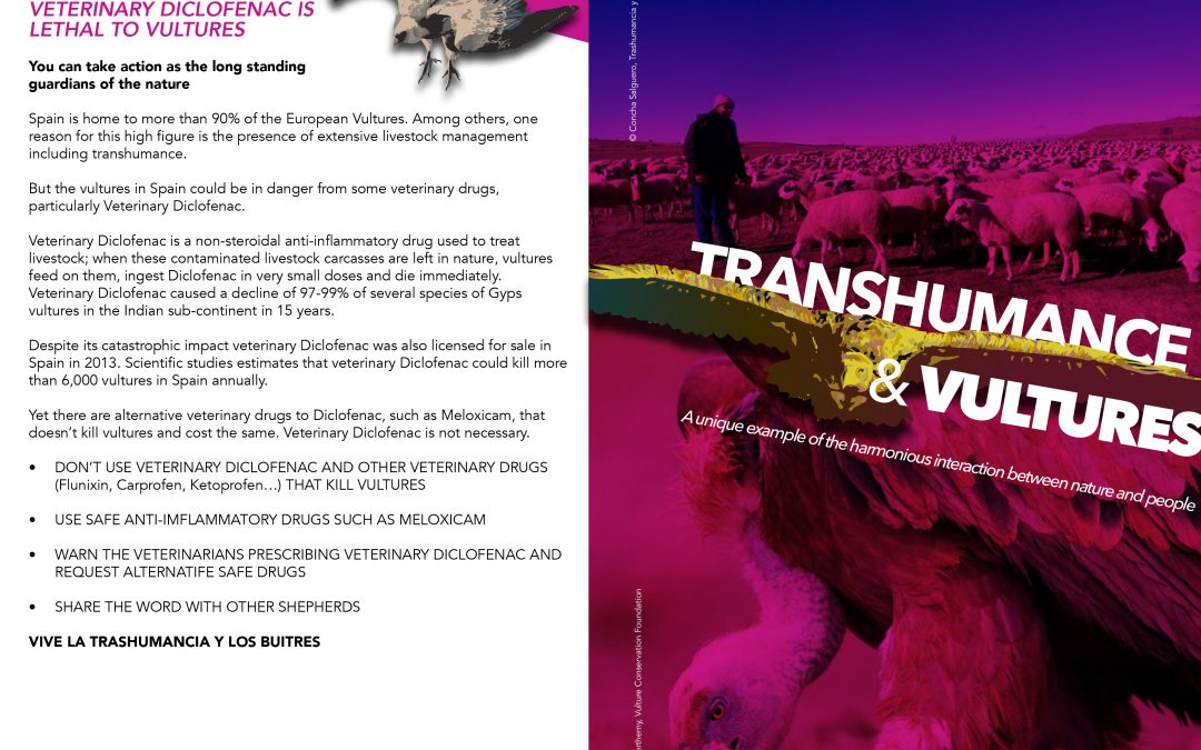 Transhumance and Vultures
